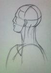 Anotomy